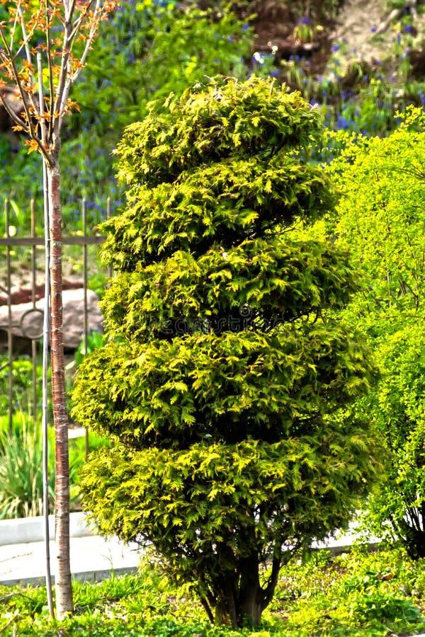 Um cipreste decorativo complementa a paisagem pitoresca do parque da cidade foto de stock