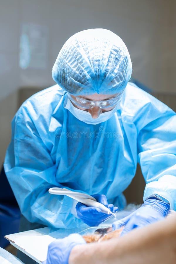 Um cirurgião do veterinário escova seus dentes de cão sob a anestesia na tabela de funcionamento Saneamento da cavidade oral nos  fotografia de stock