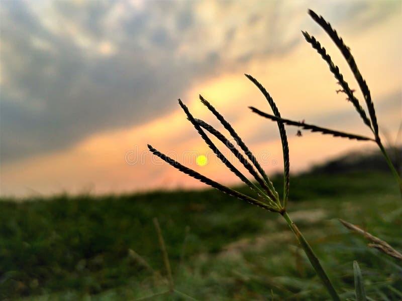 Um clique repentino antes do por do sol imagens de stock