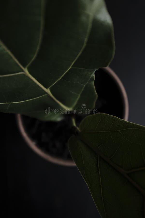 Um close up bonito da planta imagem de stock royalty free