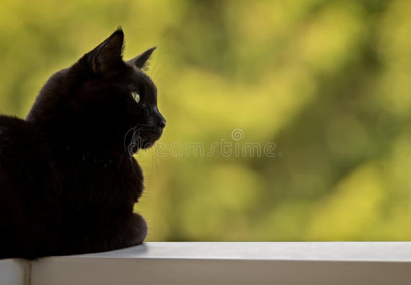 Um close up de Cat Laying preta masculina em uns trilhos do balcão fotos de stock