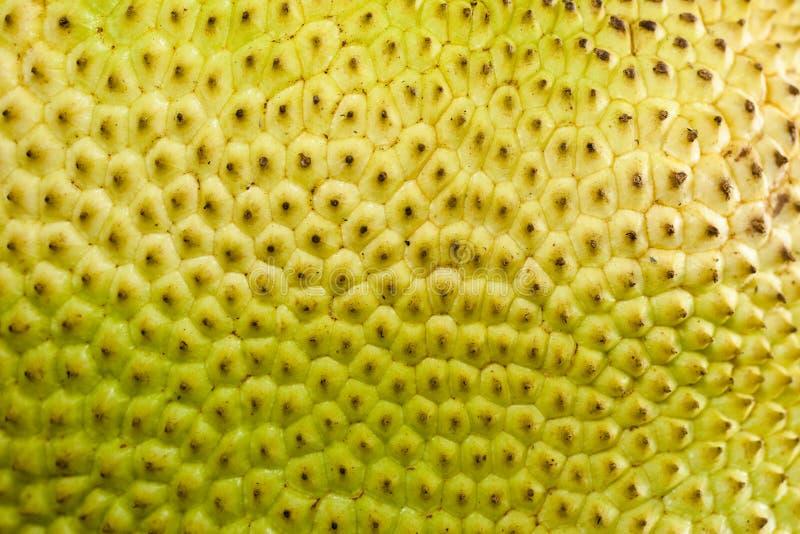 Um close-up de um jackfruit cru da fruta imagem de stock royalty free