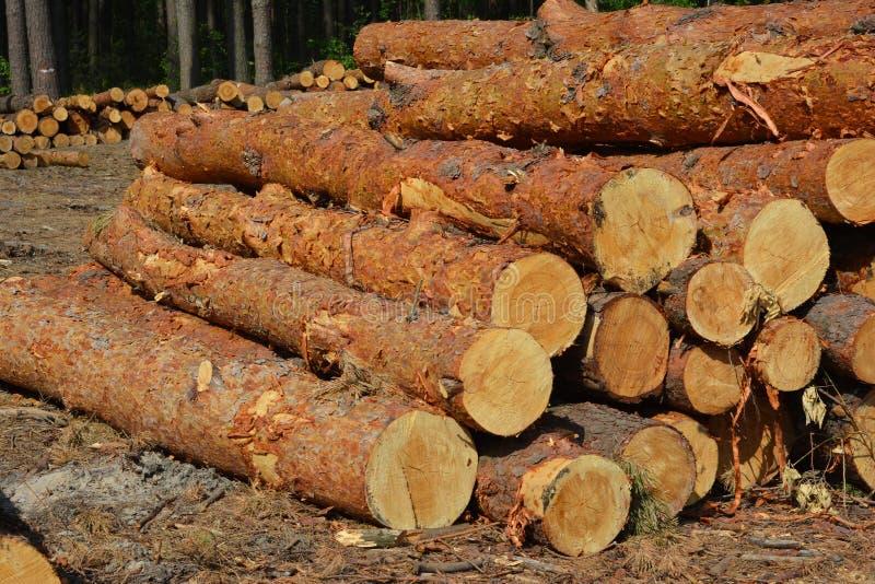 Um close-up em uma pilha de pinheiros, madeira áspera, matéria-prima de madeira, árvores cortadas foto de stock royalty free