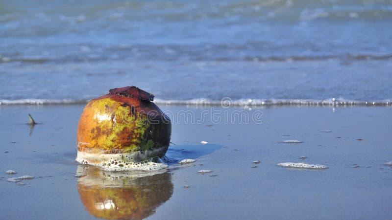 Um coco na praia imagem de stock royalty free