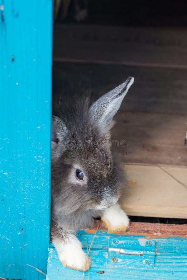 Um coelho cinzento imagens de stock