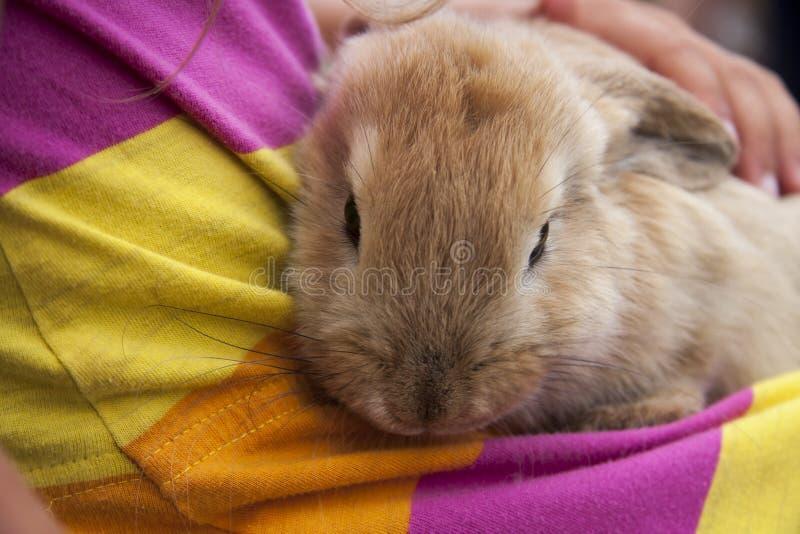 Um coelho feliz imagens de stock