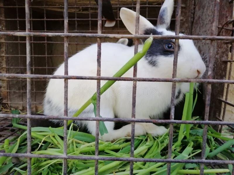 Um coelho na gaiola de ferro fotografia de stock royalty free