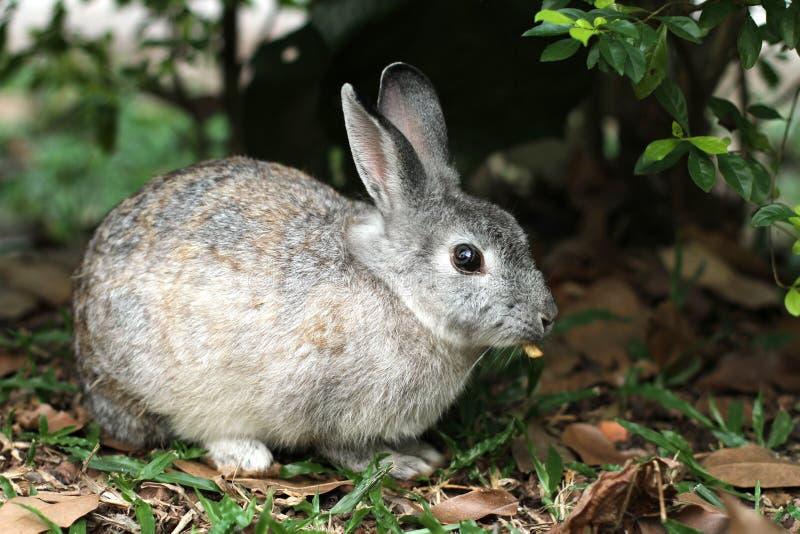 Um coelho no parque foto de stock royalty free