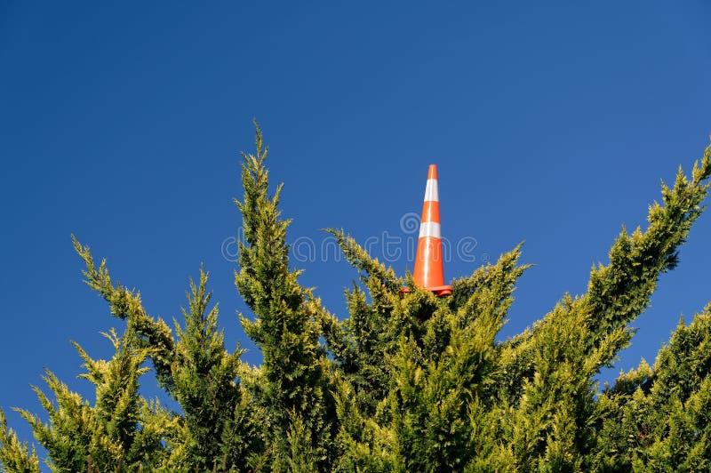 Um cone do tráfego fora do lugar acima de uma árvore alta fotografia de stock royalty free