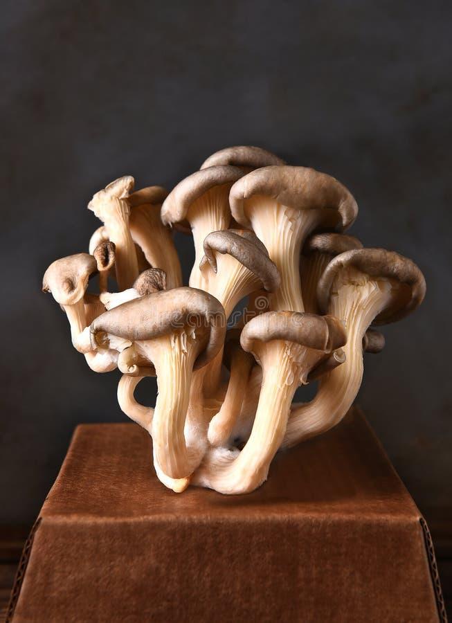 Um conjunto de cogumelos de ostra foto de stock royalty free