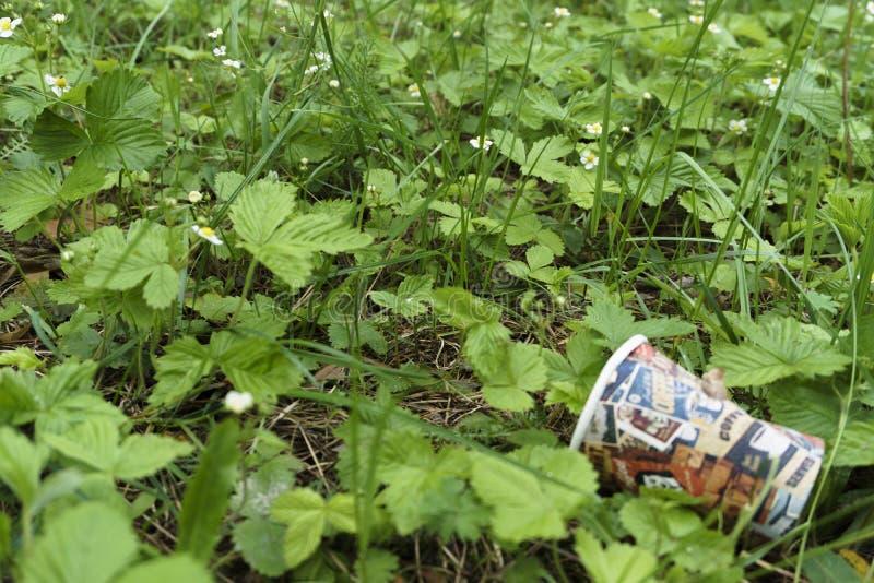 Um copo de papel bebendo vazio encontra-se ap?s a utiliza??o no arbusto ao lado do pavimento, de que ? um tipo da polui??o do amb fotos de stock