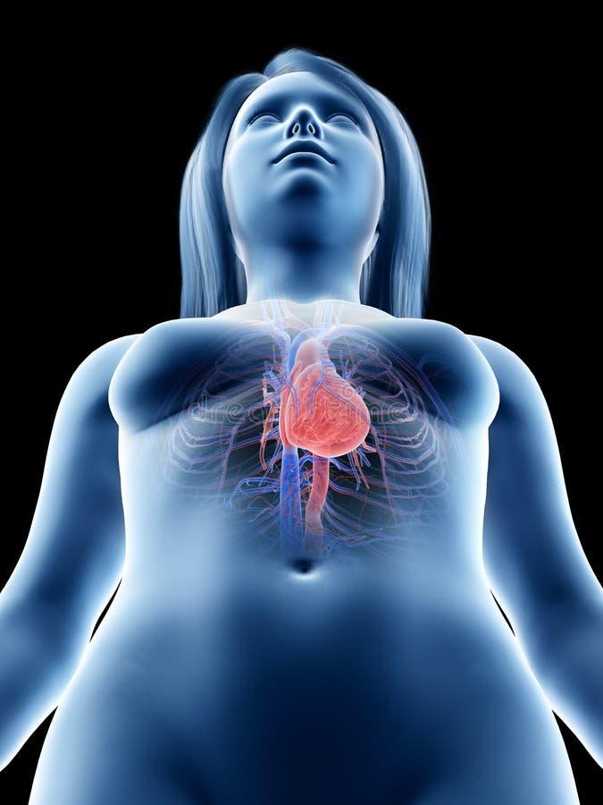 Um coração das fêmeas ilustração stock