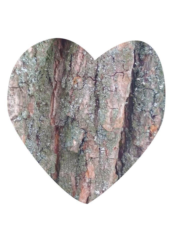 Um coração Textura de madeira foto de stock royalty free