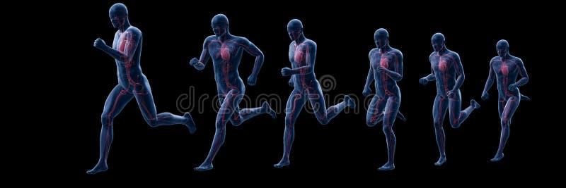 Um corredor equipa o coração ilustração stock