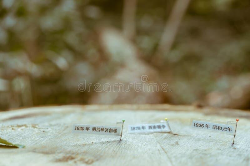 Um coto de árvore de uma árvore japonesa velha, identificada por meio de notas pequenas que mostre seu crescimento ao longo dos a imagem de stock