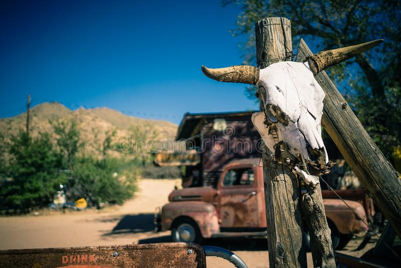 Um crânio animal em um polo no Vale da Morte o Arizona imagem de stock