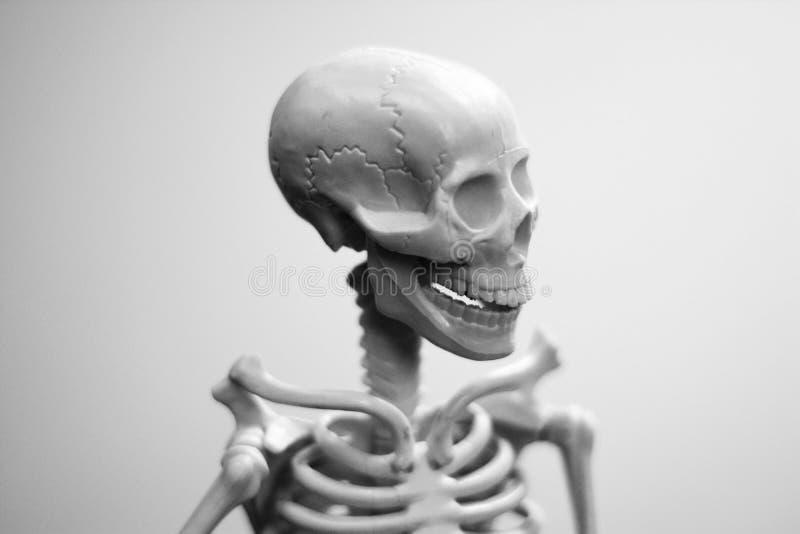 Um crânio do homem de sorriso fotos de stock royalty free