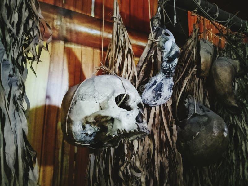 Um crânio em Sabah Museum imagem de stock