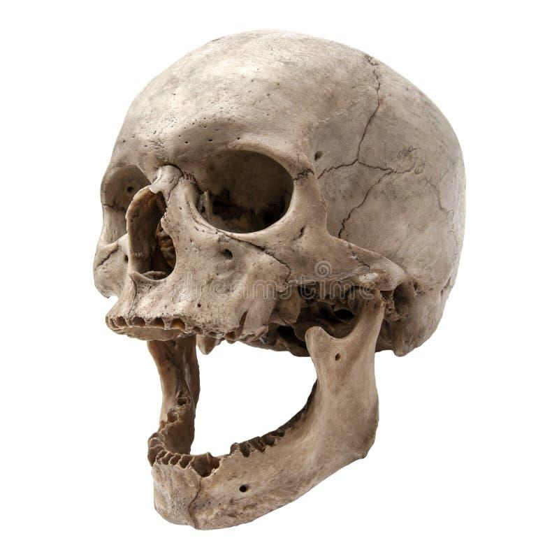 Um crânio humano velho em uma posição de três quartos fotografia de stock