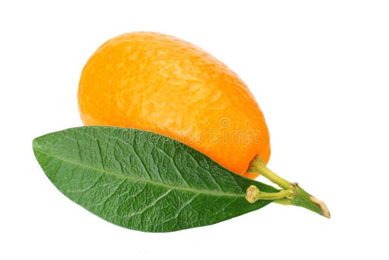 um cumquat ou kumquat com a folha isolada no fundo branco fotografia de stock royalty free