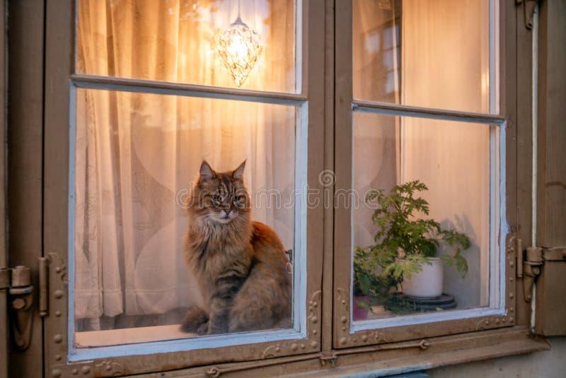 Um curioso gato laranja numa janela penetra em Estocolmo - 2 foto de stock royalty free