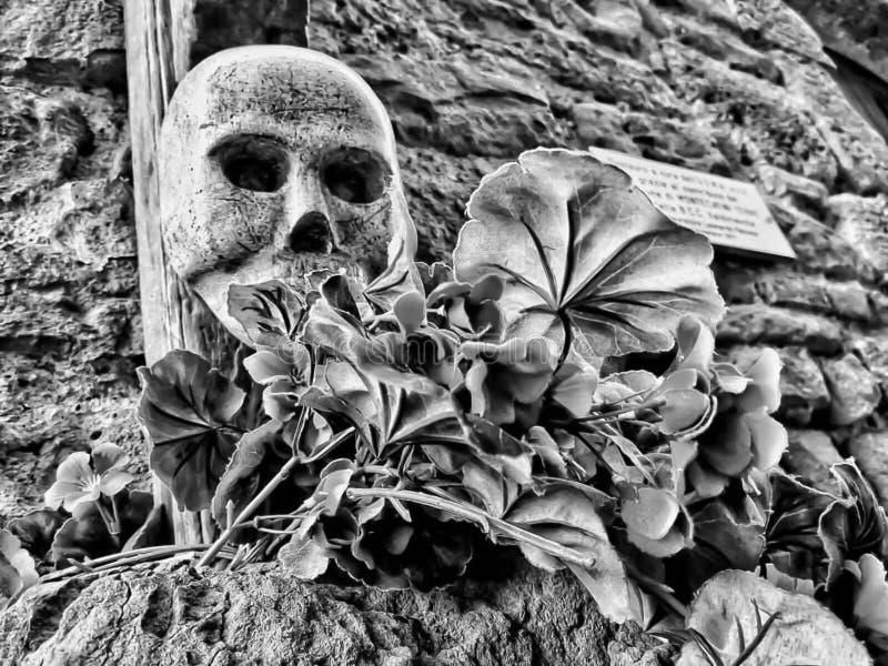 Um detalhe do crânio com flores imagens de stock