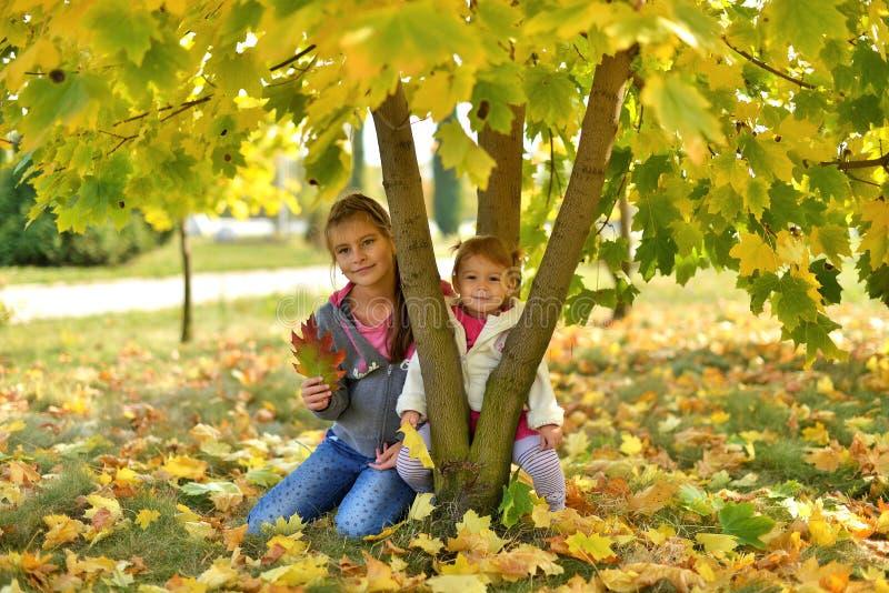 Um dia ensolarado morno no outono dourado fotos de stock royalty free