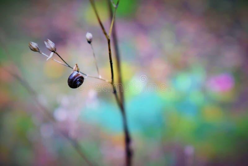 Um dia na floresta fotografia de stock