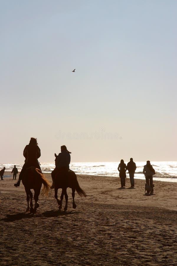 Download Um dia na praia imagem de stock. Imagem de doggy, blond - 535569