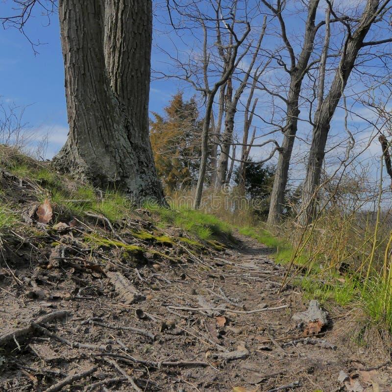 Um die Biegung im Wald lizenzfreie stockfotos