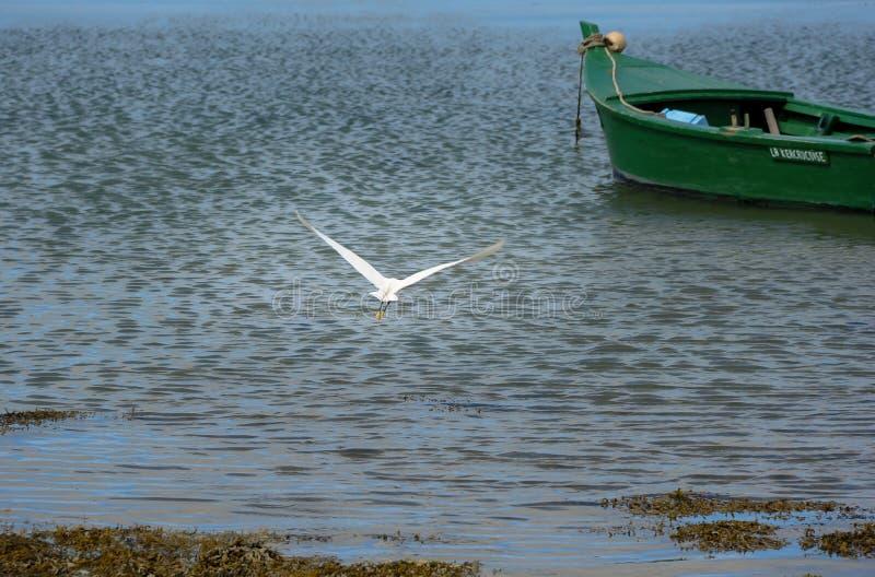 Um egret pequeno que voa afastado com um barco verde no fundo imagem de stock royalty free