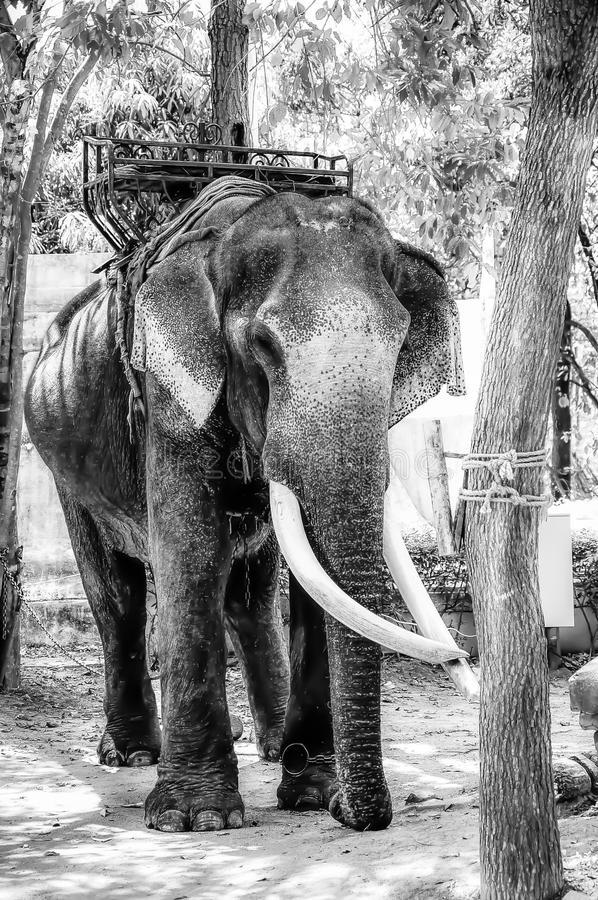 Um elefante em um parque do elefante imagens de stock