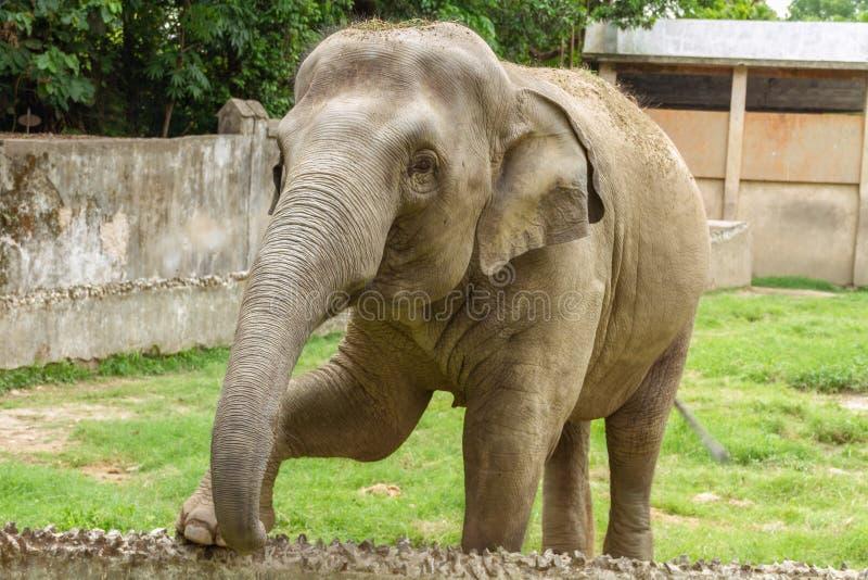 Um elefante novo no jardim zoológico de Kolkata imagem de stock