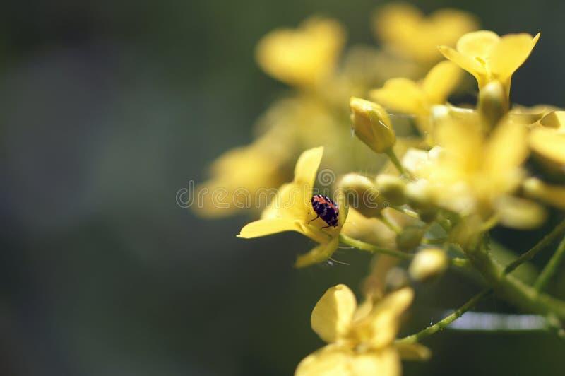 Um erro em uma flor selvagem da floresta fotografia de stock royalty free
