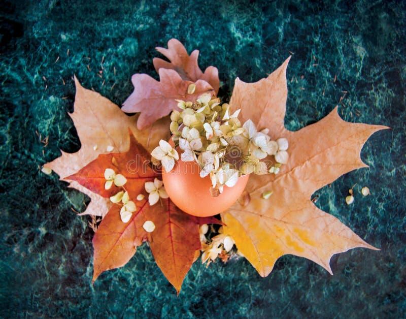 Um escudo colorido, um ovo quebrado com um fundo das folhas de outono amarelas e vermelhas, flores secadas da hortênsia e mármore foto de stock