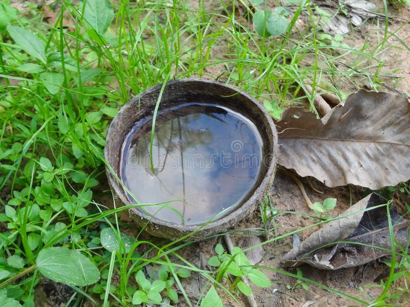 Um escudo do coco tem a água Faz com que o mosquito coloque os ovos que causam a manifestação da febre de dengue em Tailândia imagens de stock royalty free