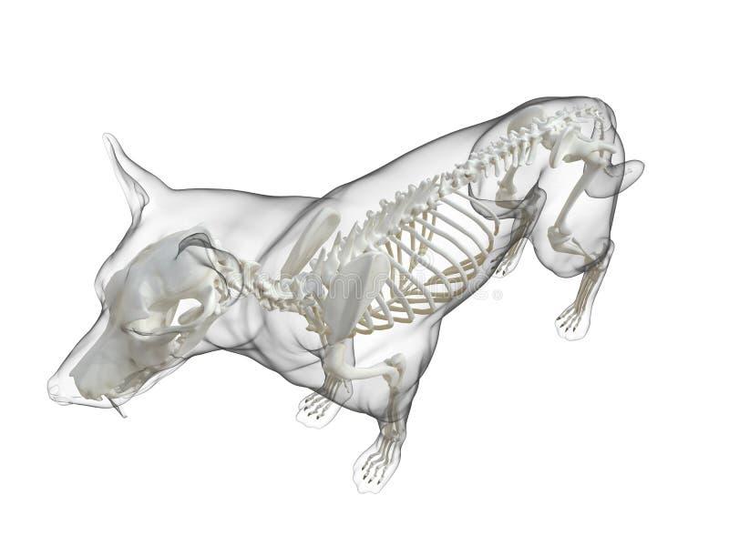 Um esqueleto do c?o ilustração do vetor