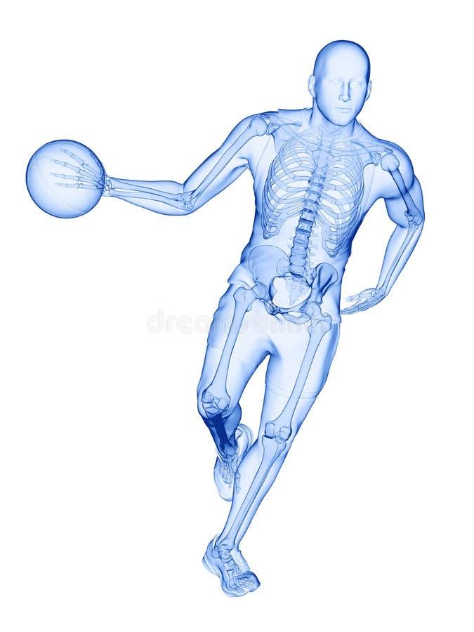 um esqueleto dos jogadores de basquetebol ilustração do vetor