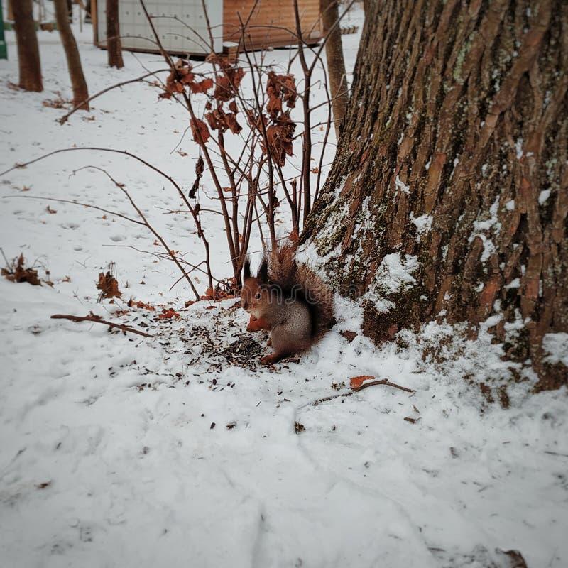 Um esquilo foto de stock