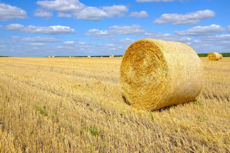 Um fardo de feno no campo após a colheita da palha fotos de stock