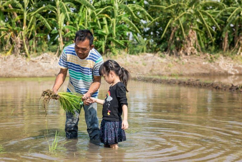 Um fazendeiro está ensinando uma criança pequena trabalhar em um campo de almofada do arroz fotografia de stock