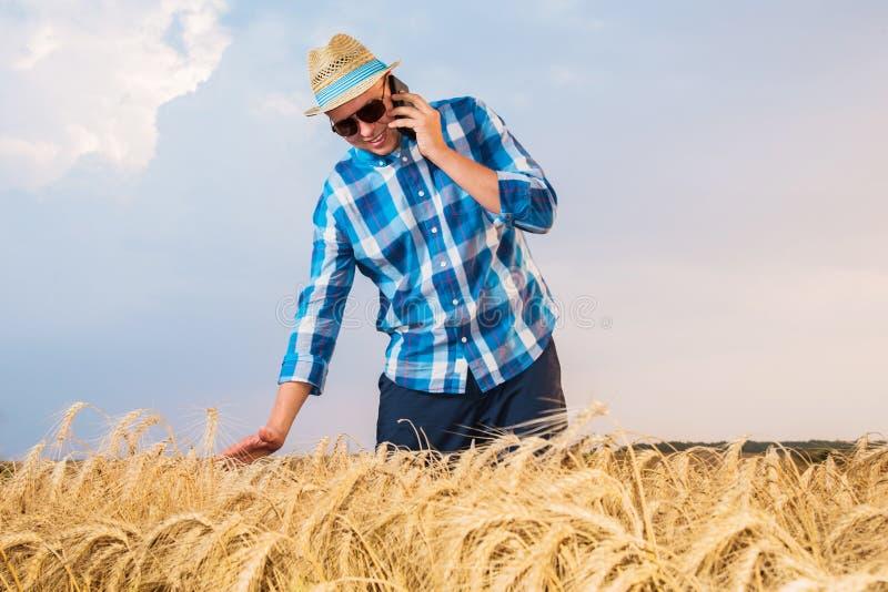 Um fazendeiro inspeciona um campo de trigo imagens de stock