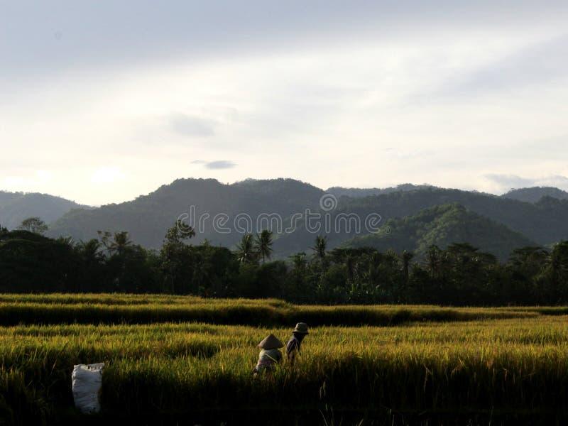 Um fazendeiro local foto de stock