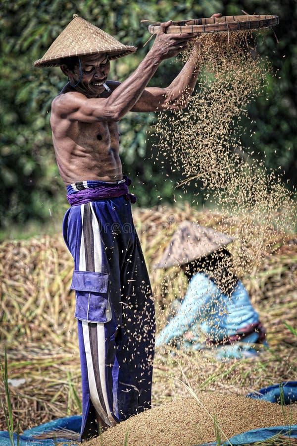 Um fazendeiro masculino que peneira grões através da peneira fotos de stock royalty free