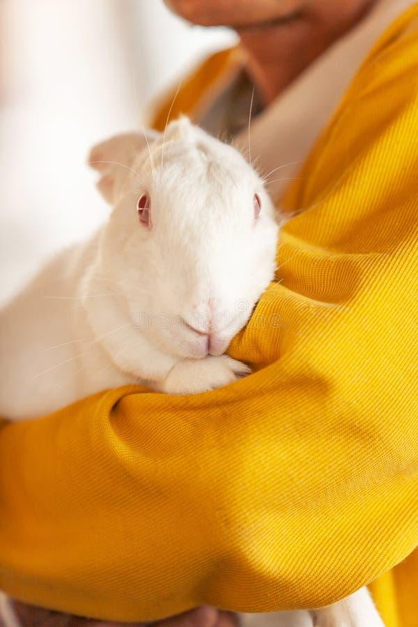 Um fazendeiro masculino superior que abra?a um coelho branco em sua explora??o agr?cola, bonito um coelho macio, cultivo local em foto de stock royalty free