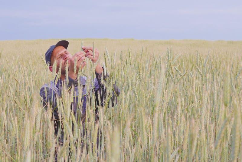 Um fazendeiro novo verifica as plantas em um campo do centeio Copie o espaço imagens de stock