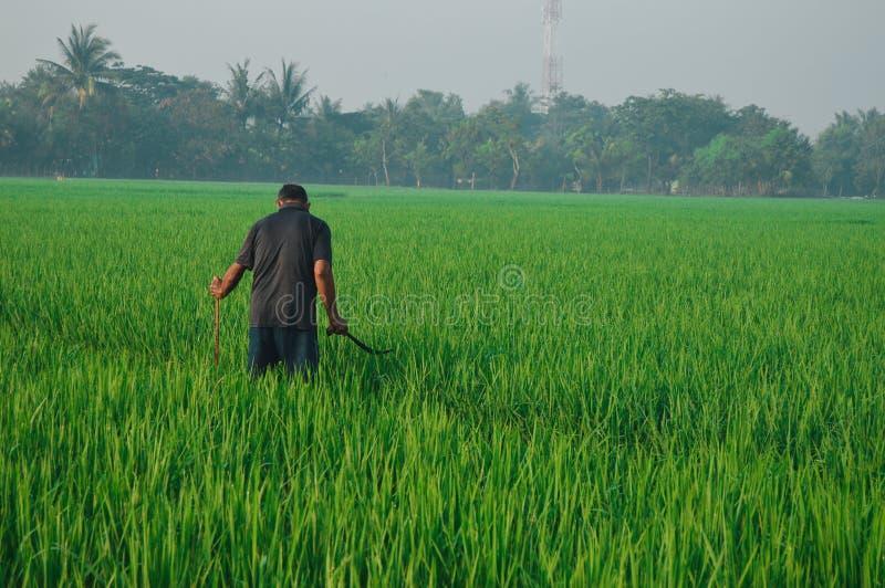 Um fazendeiro que esteja trabalhando imagens de stock