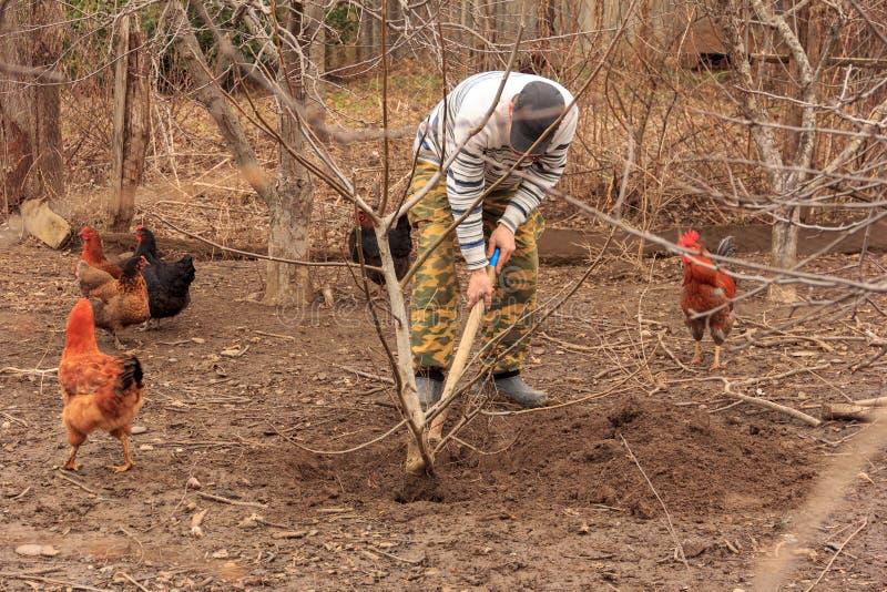 Um fazendeiro que planta a árvore de noz foto de stock royalty free
