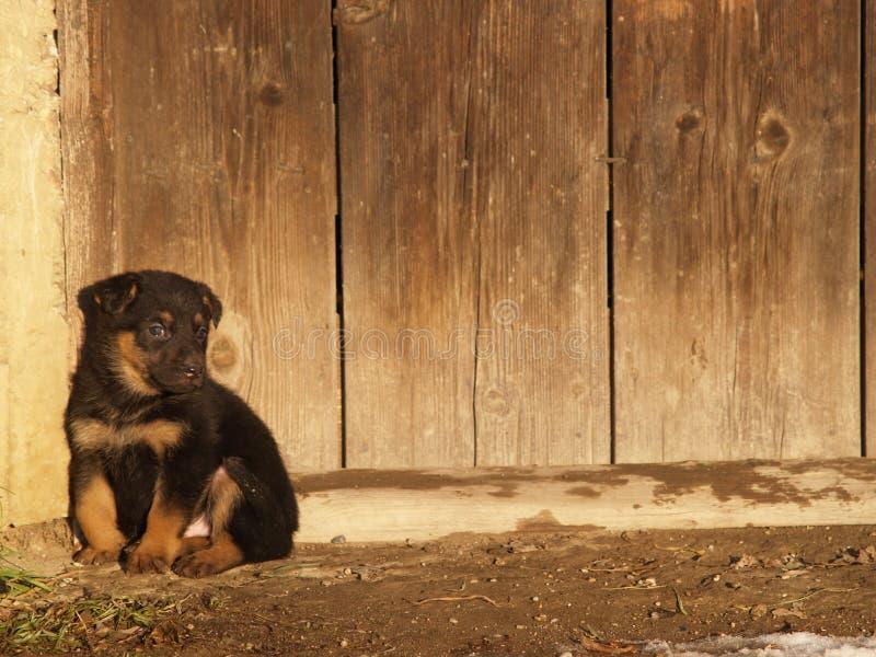 Um filhote de cachorro fotografia de stock