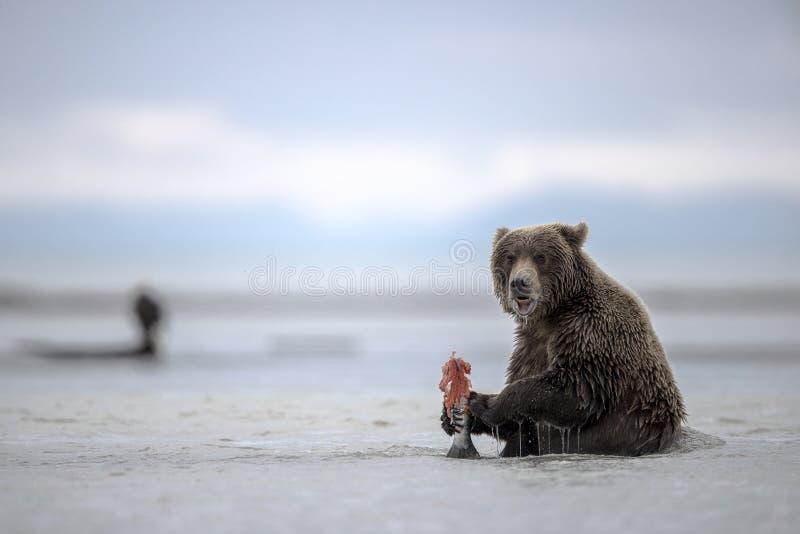 Um filhote do urso que enyoing sua refeição imagens de stock